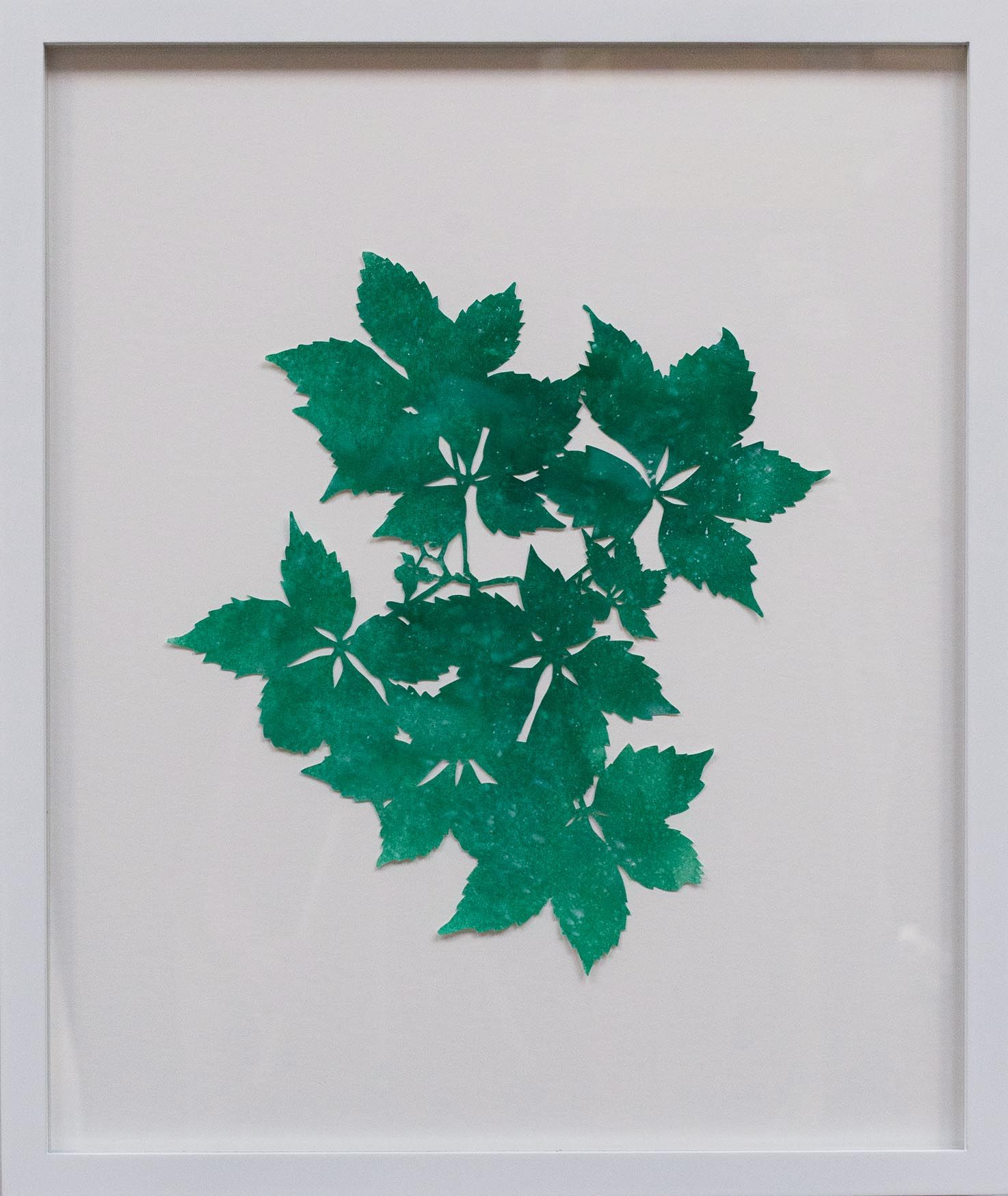Hannah Cole  Virginia Creeper, 2018  watercolor on cut paper  Framed: 24h x 20w in 60.96h x 50.80w cm  HC_041