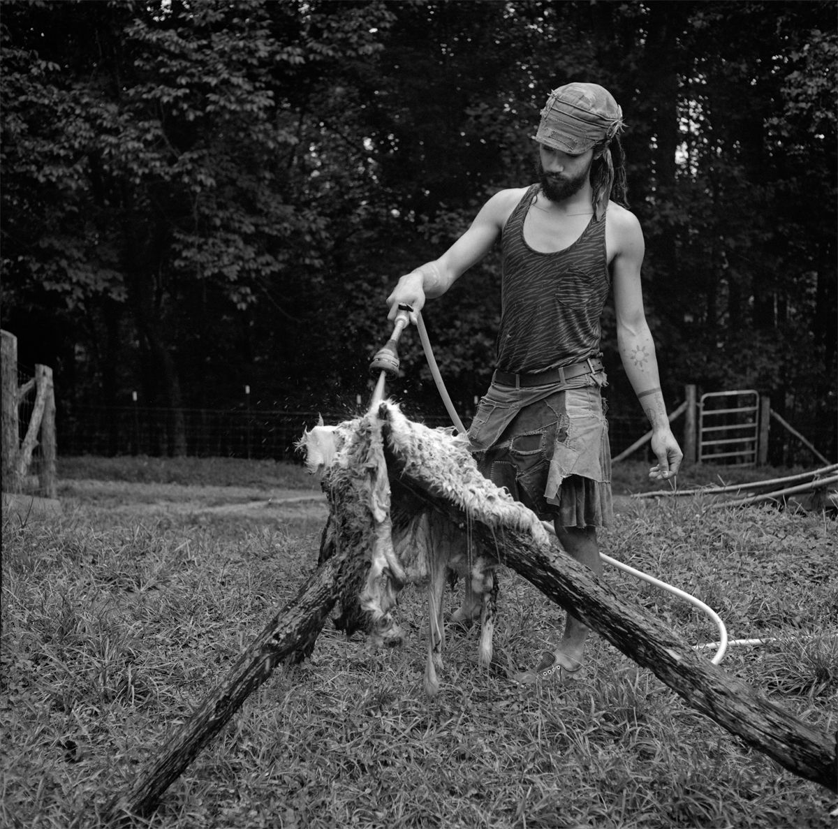 Rob Amberg, Gibberish cleaning sheep hide, Paw Paw, Madison County, NC, 2014, Archival Pigment Print, 5 x 5 (image size), Edition of 10, Photography, Photography Gallery