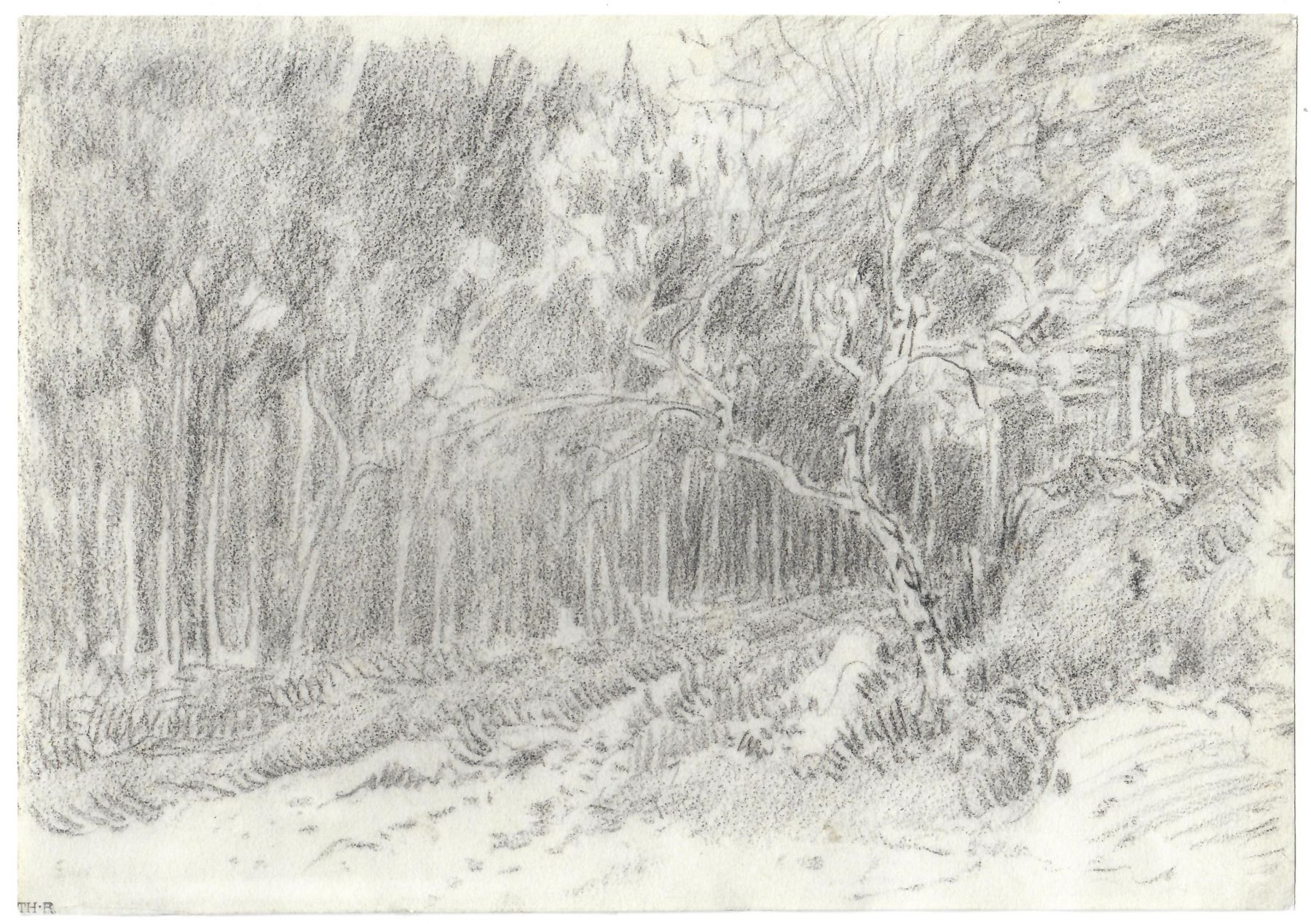 Theodore Rousseau Path through the Forest, c. 1855 Black chalk 7 1/2 x 10 7/8 inches