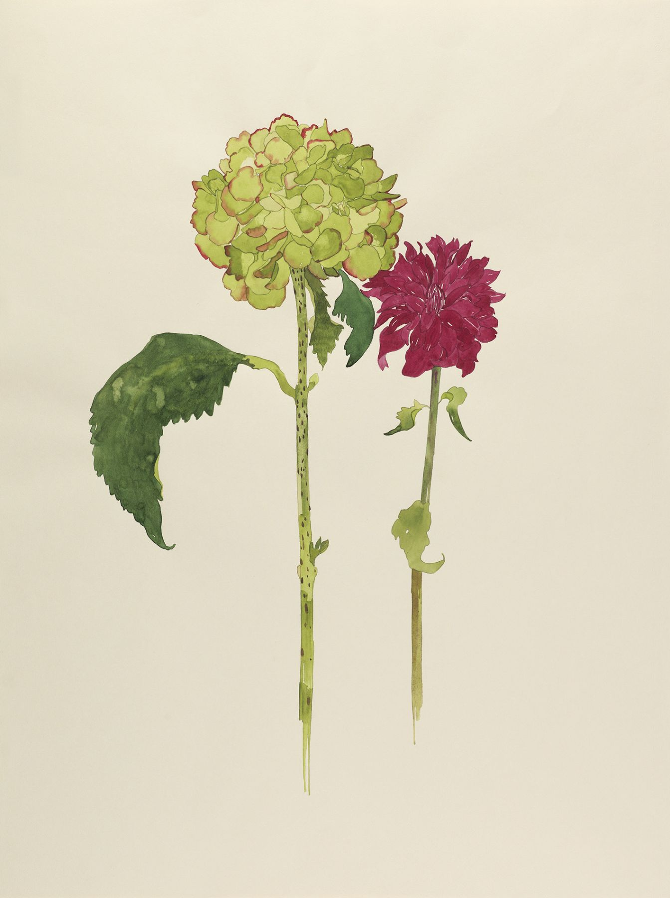 Pamela Sztybel, Hydrangea with Dahlia, 2017, Watercolor on paper 25 1/2 x 19 1/2 inches