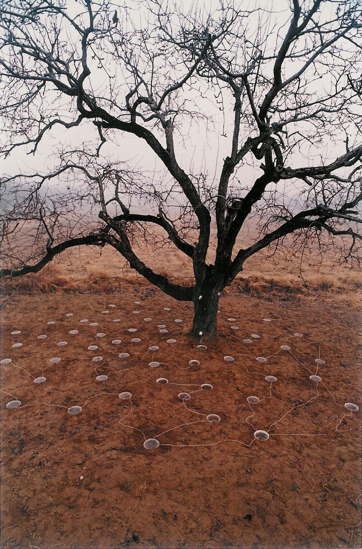 "Pear Tree ç¦»æ '1994Color photograph æ'""å½±47 1/4 x 70 7/8 in (120 x 180 cm)Edition of 12 (12版)"