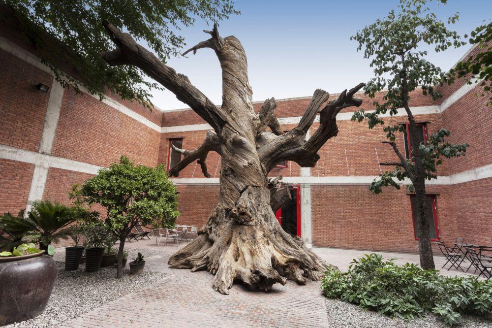 Tree 树, 2015