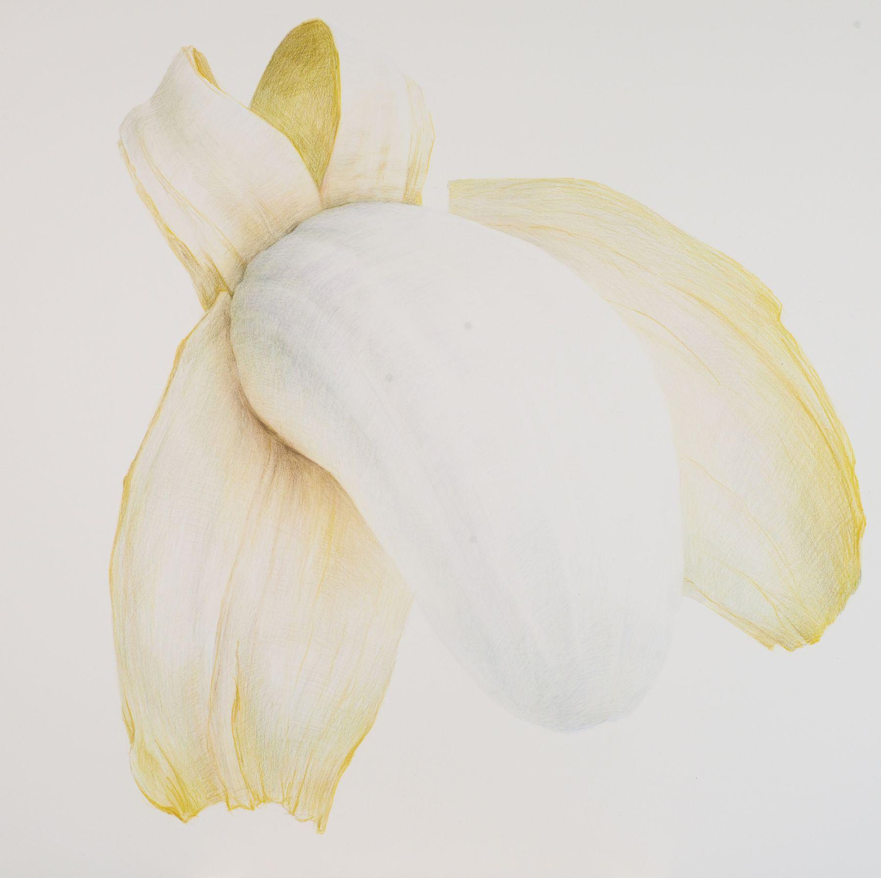 Zhang Dun 张盾, Banana 3 香蕉 3