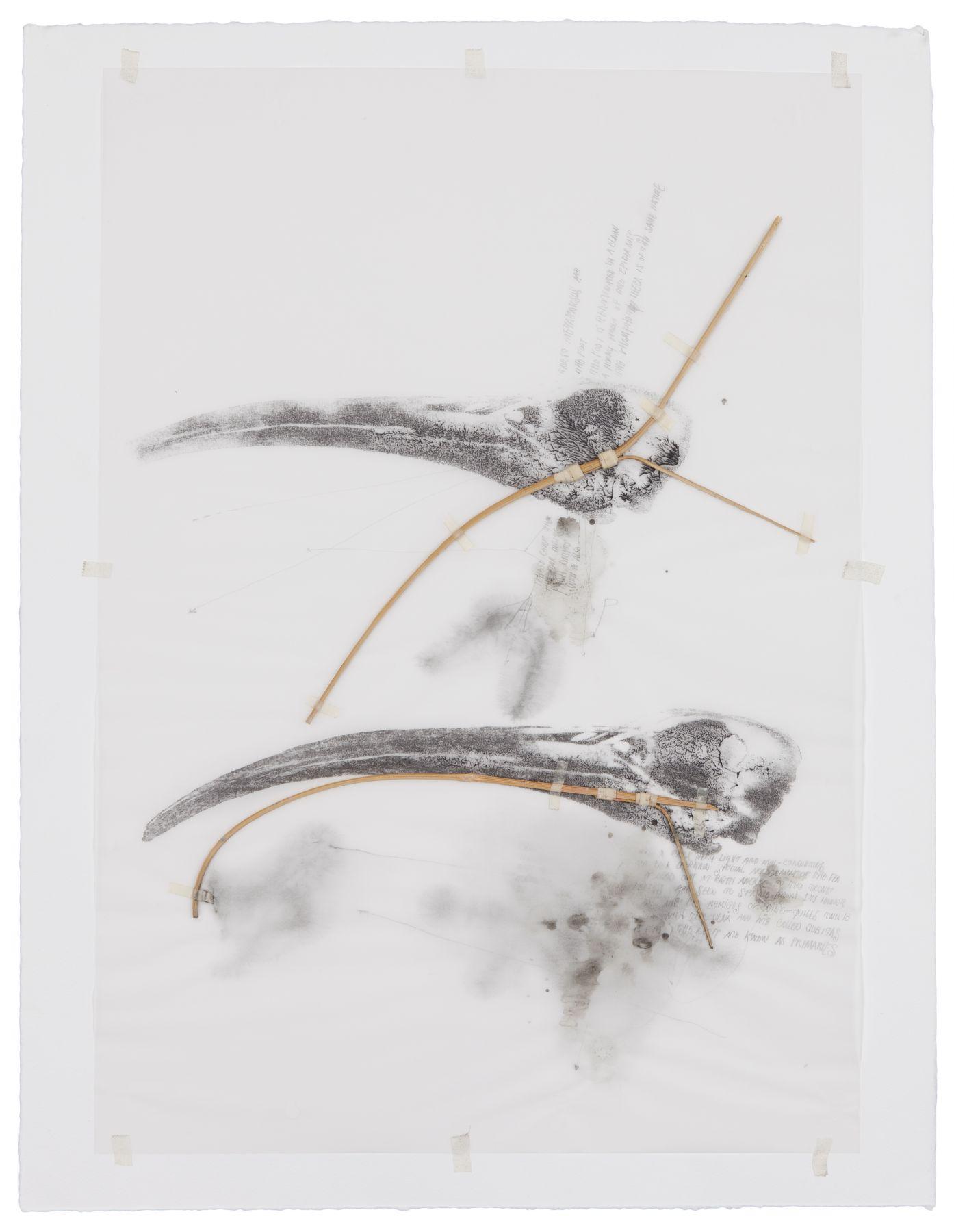 Ricardo Brey, Cabezas ibis, 2007