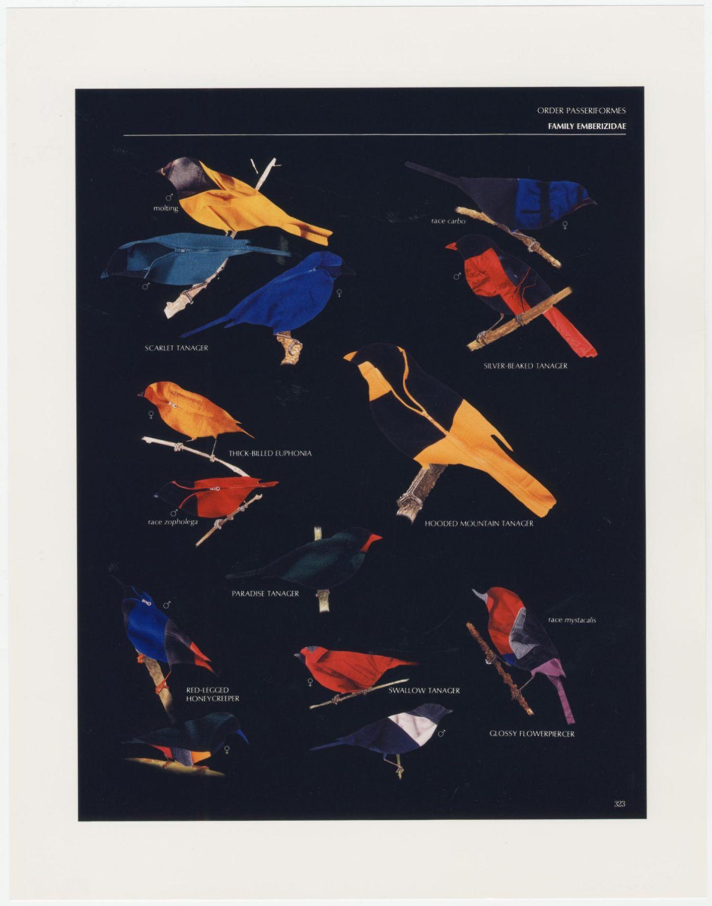 FRED TOMASELLI: Order Passeriformes (Black Version)