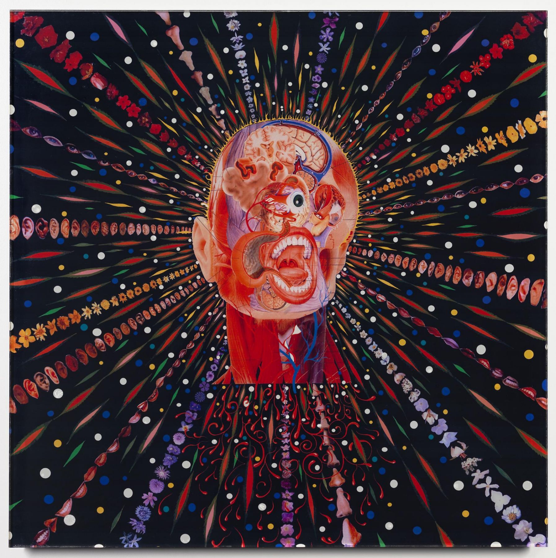 FRED TOMASELLI: Cyclopticon