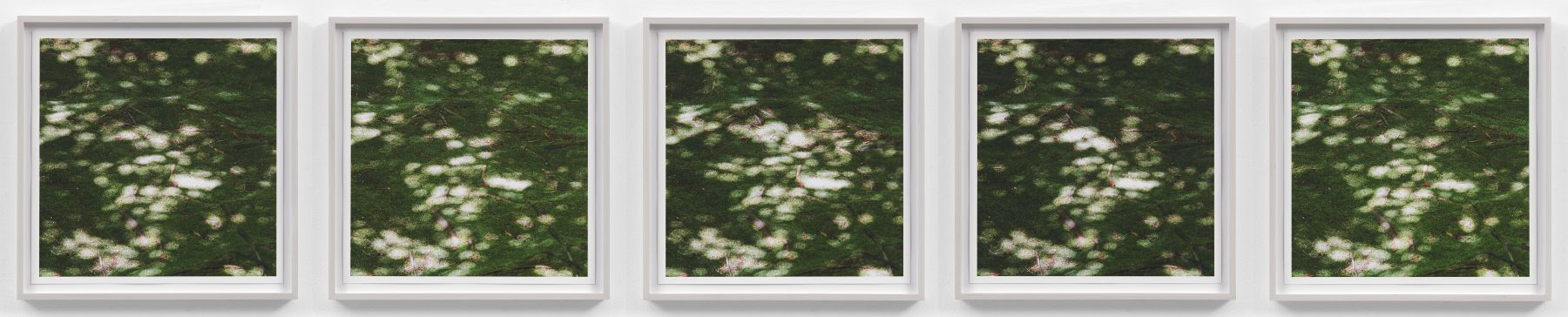 SPENCER FINCHInvisible Breeze (Ryoanji)2017Five archival inkjet photographs 17 x 17 (each)43.2 x 43.2 cm (each)Editon of 5 + 1APJCG9440