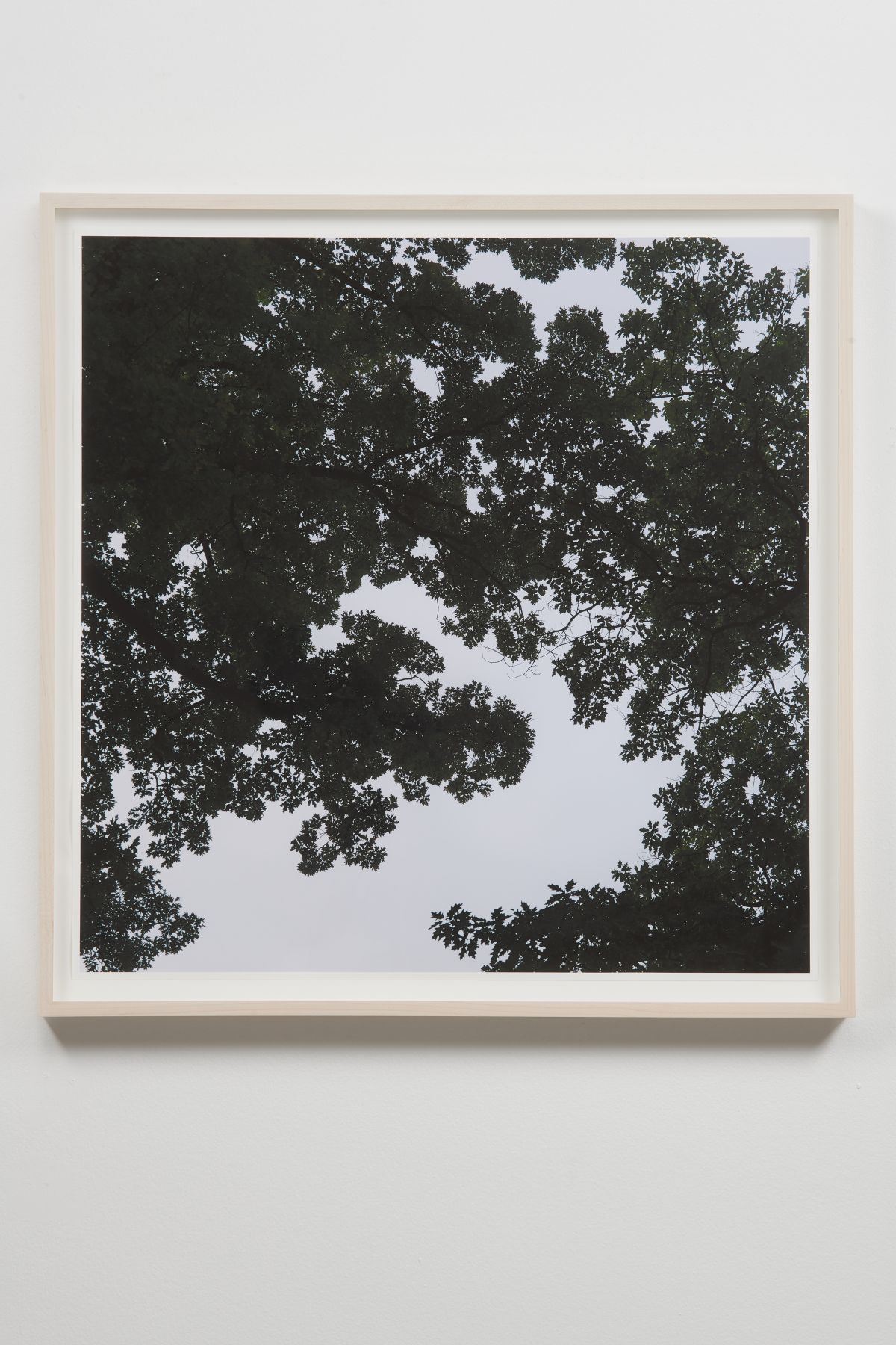 SPENCER FINCH, Oak Tree, Dawn (when two-dimensions become three-dimensions)