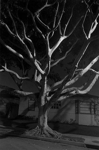 Henry Wessel Night Walk No. 55