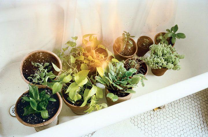 Dan Torop Plants