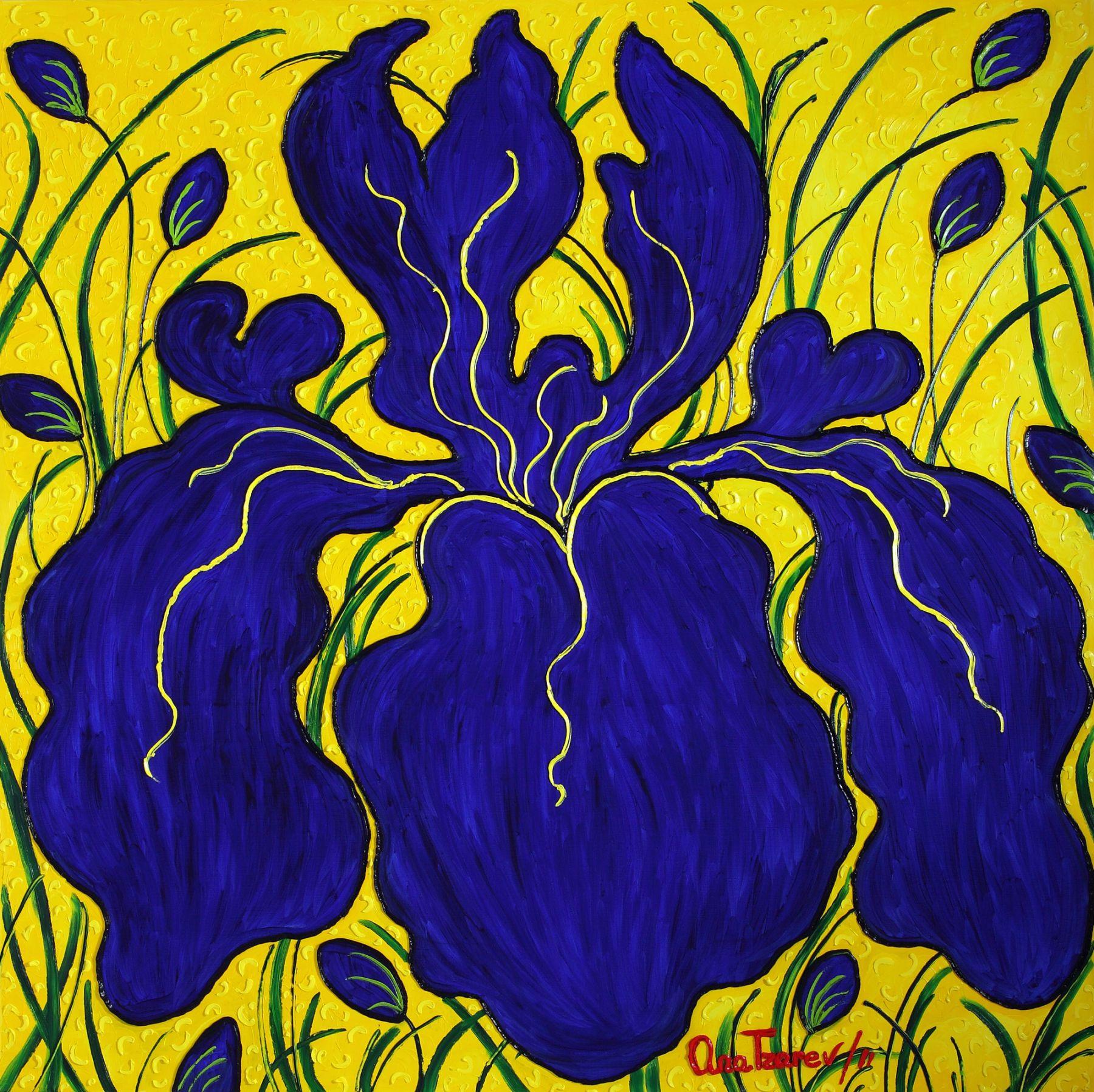 Emperator (Iris) (Garden La Fleur du Cap), 2011 n 4169