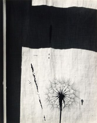 Scottish Thistle, Rochester, New York, 1958