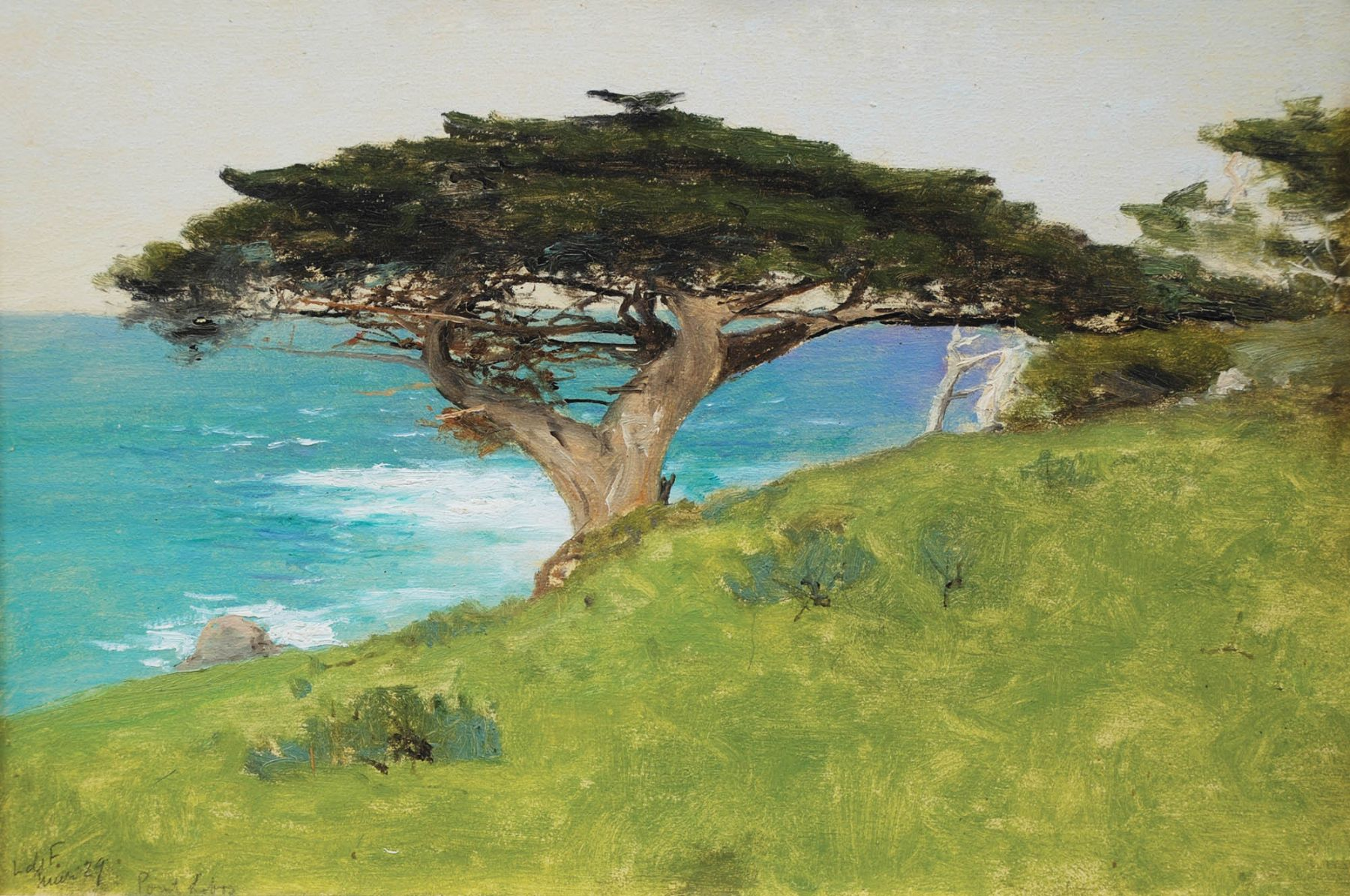 "Lockwood De Forest, ""Point Lobos""  Veteran Tree (Monterey), January 29, 1911"