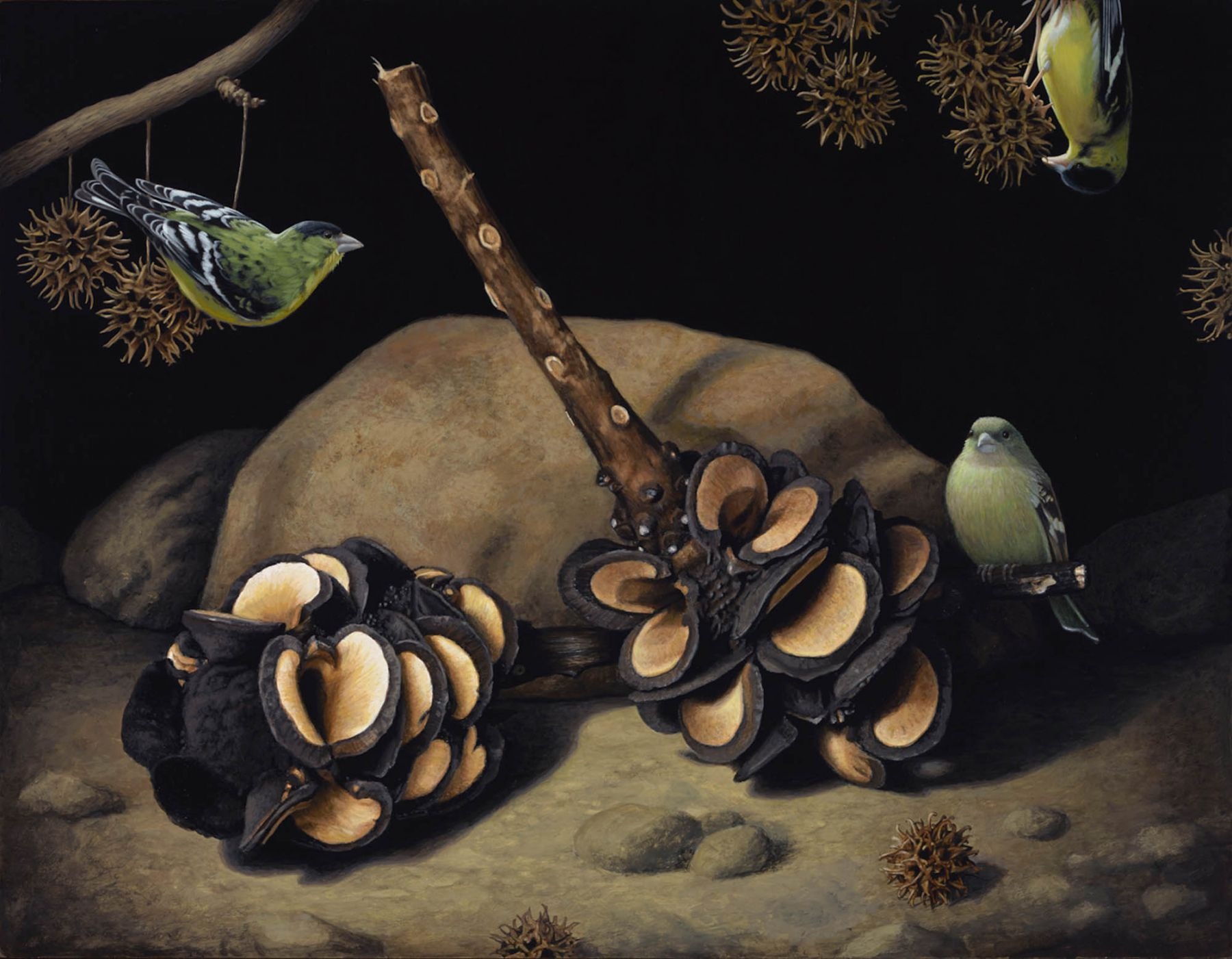 Susan McDonnell, Banksia Pods and Lesser Goldfinches, 2015