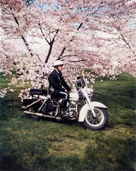 Springtime, Washington, 1965