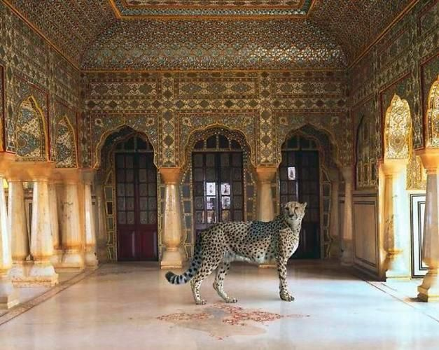 The Return of the Hunter. Jaipur Palace. Jaipur.