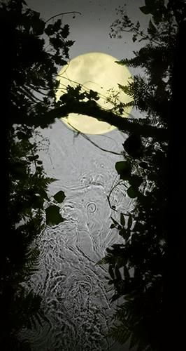 Yellow Moon. 2012, 	Digital C-Type Print. 24 x 12.5""
