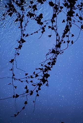 Star Field Ivy. 2012, 	Digital C-Type Print. 24 x 12.5""