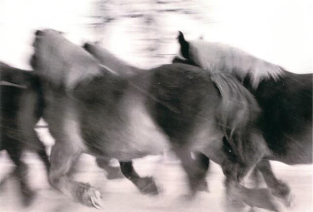 Horses #3, 2005-2006