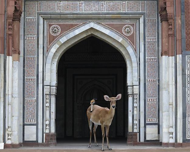 The Messenger, Purana Quila, New Delhi.