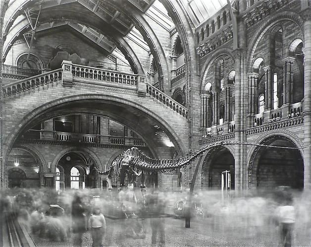 Matthew Pillsbury. Wyoming Diplodocus Natural History Museum, London 2007