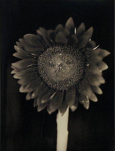Chuck Close, Sunflower, 2007