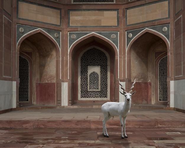 The Witness, Humayun's Tomb, New Delhi.