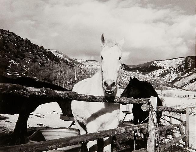 Horses, Aspen.