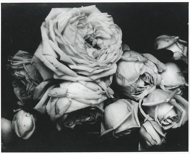Edward Steichen. Heavy Roses, France. 1914.