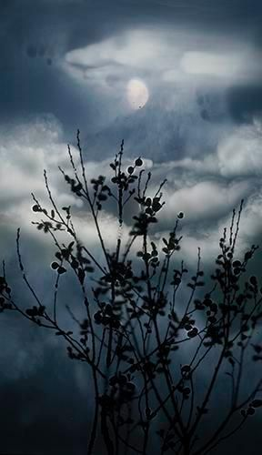 Gibbous Moon Willow. 2012, 	Digital C-Type Print. 24 x 13.5""