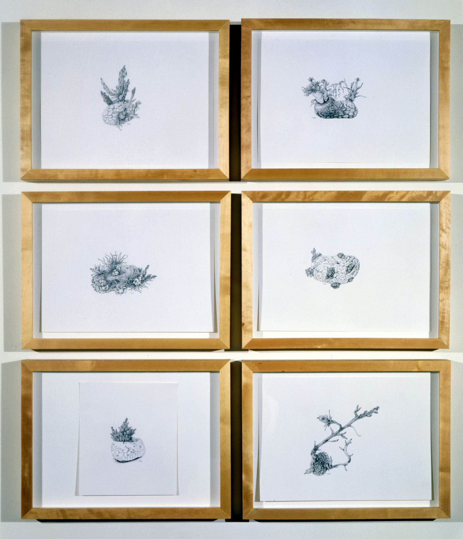 ANYA GALLACCIO, Six potatoes drawn- (belief in an immaculate being) , 2001