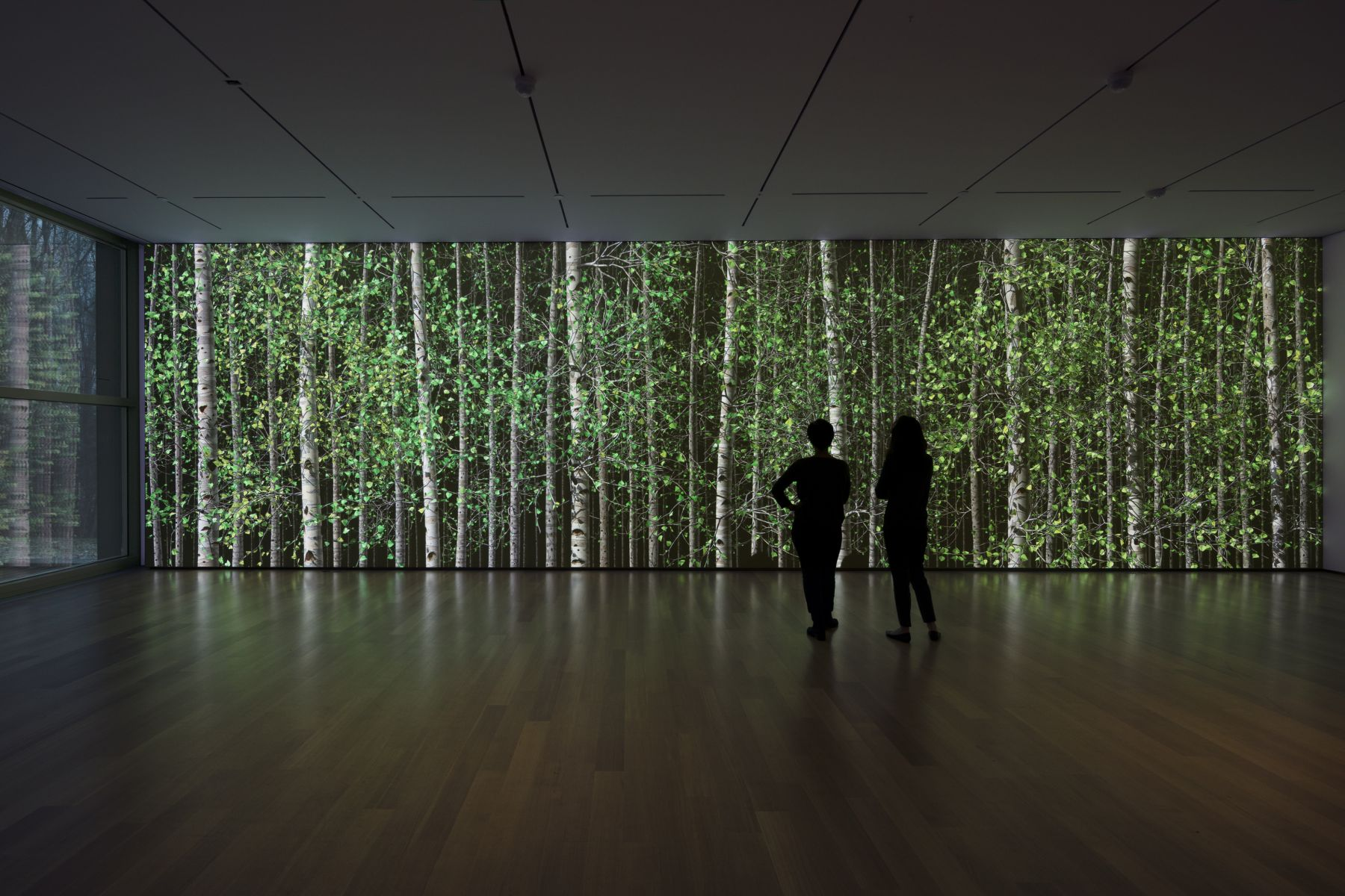 Jennifer Steinkamp:Blind Eye, Installation view, The Clark Art Institute, Williamstown, MA