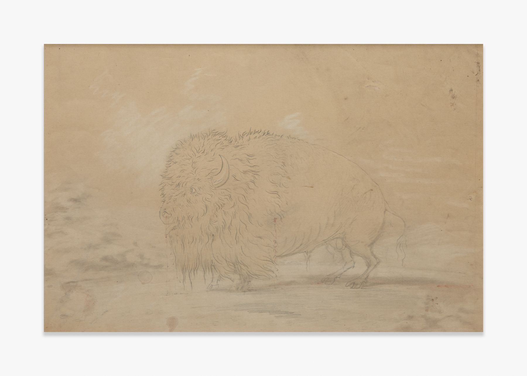 George Catlin   Wounded Bison