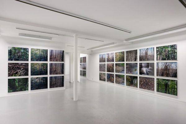 Joseph Bartscherer: Forest – installation view 8