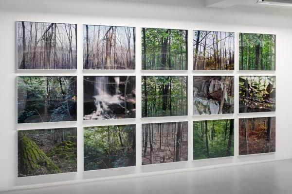 Joseph Bartscherer: Forest – installation view 3