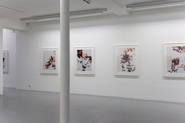 James Welling– installation view 4