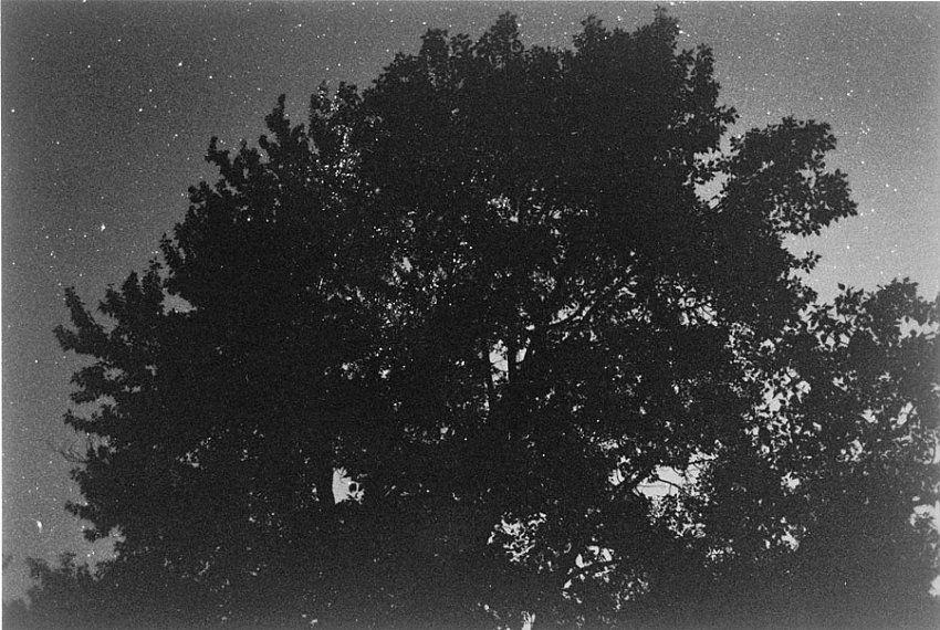 Robert Adams, Pine Valley, Oregon