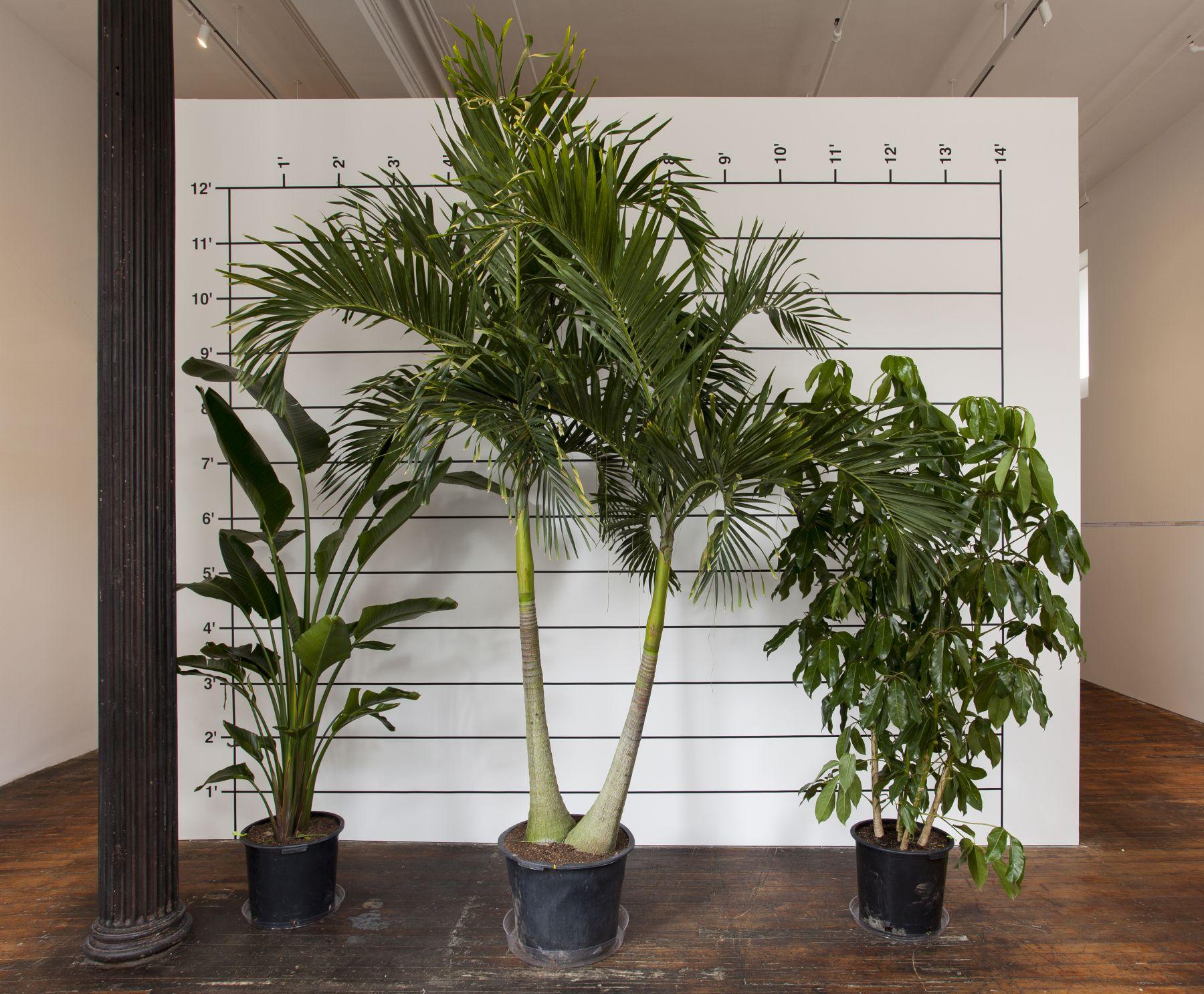 Mel Bochner, Measurement Plants