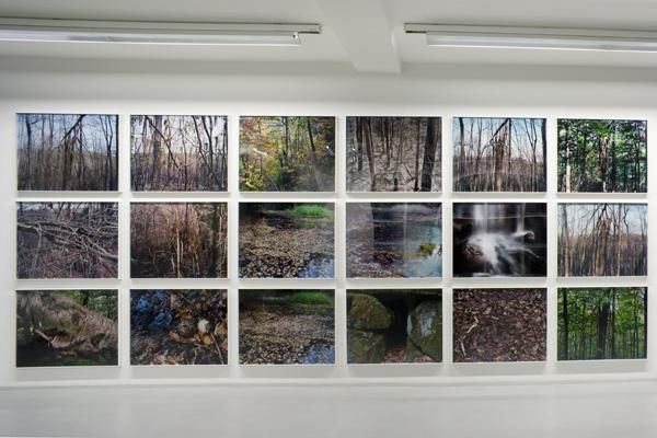 Joseph Bartscherer: Forest – installation view 5
