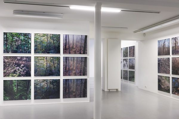 Joseph Bartscherer: Forest – installation view 2