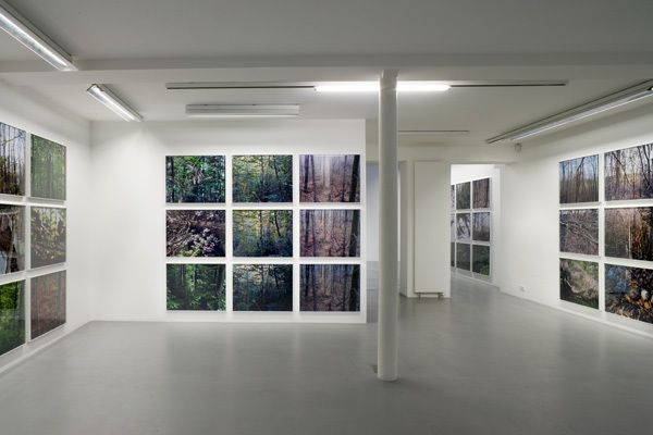Joseph Bartscherer: Forest – installation view 1