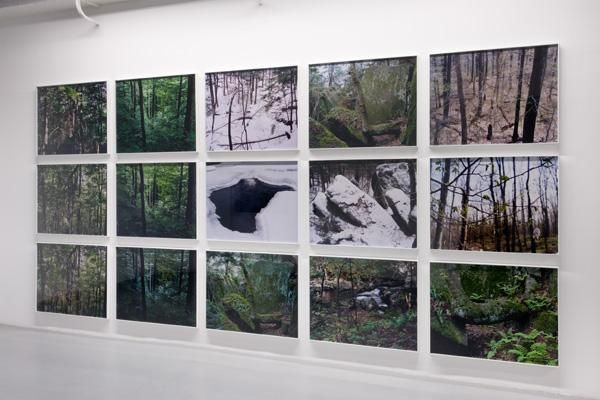 Joseph Bartscherer: Forest – installation view 6