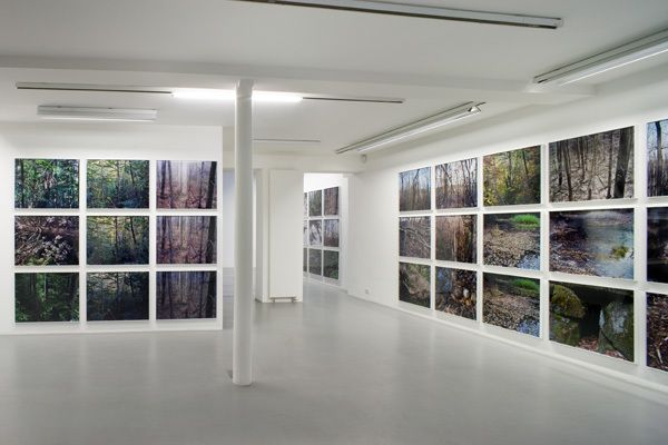 Joseph Bartscherer: Forest – installation view 4