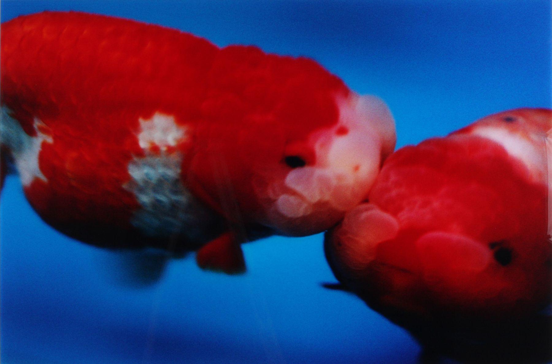 two fish by mika ninagawa