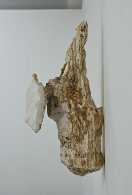a nature inspired work of art made of plaster by Bjorn Braun