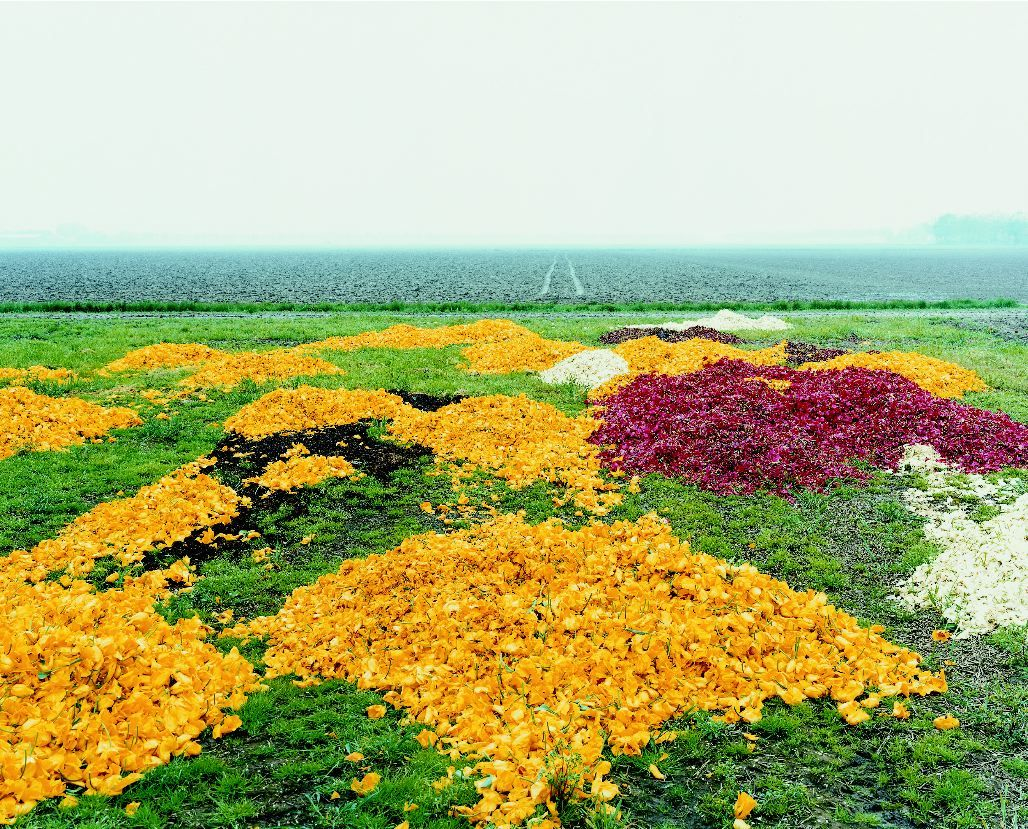 landscape with yellow and red fowers by thomas fletchner
