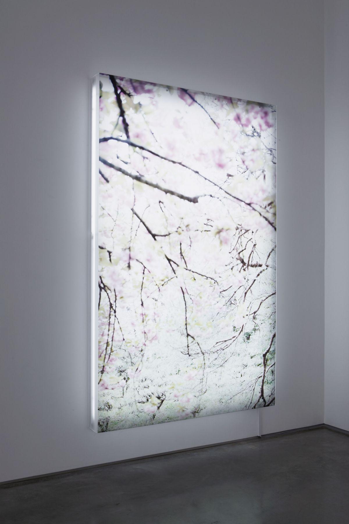 Sakura 7, 2003