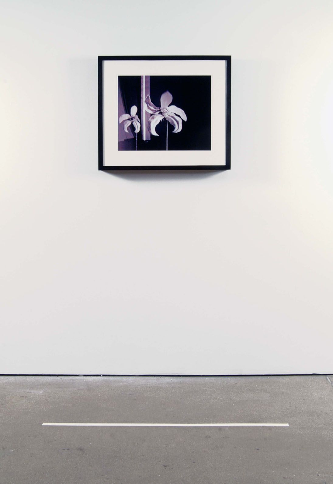 installation view of photograph with purple flowers by john waters