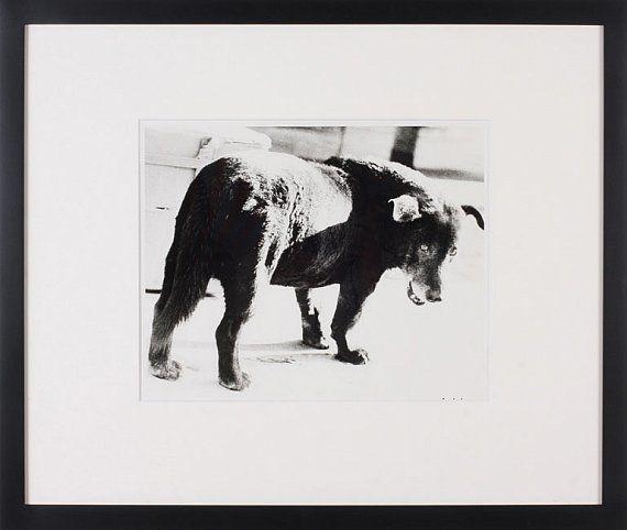 Daido Moriyama, Stray Dog, Misawa Aomori, 1971