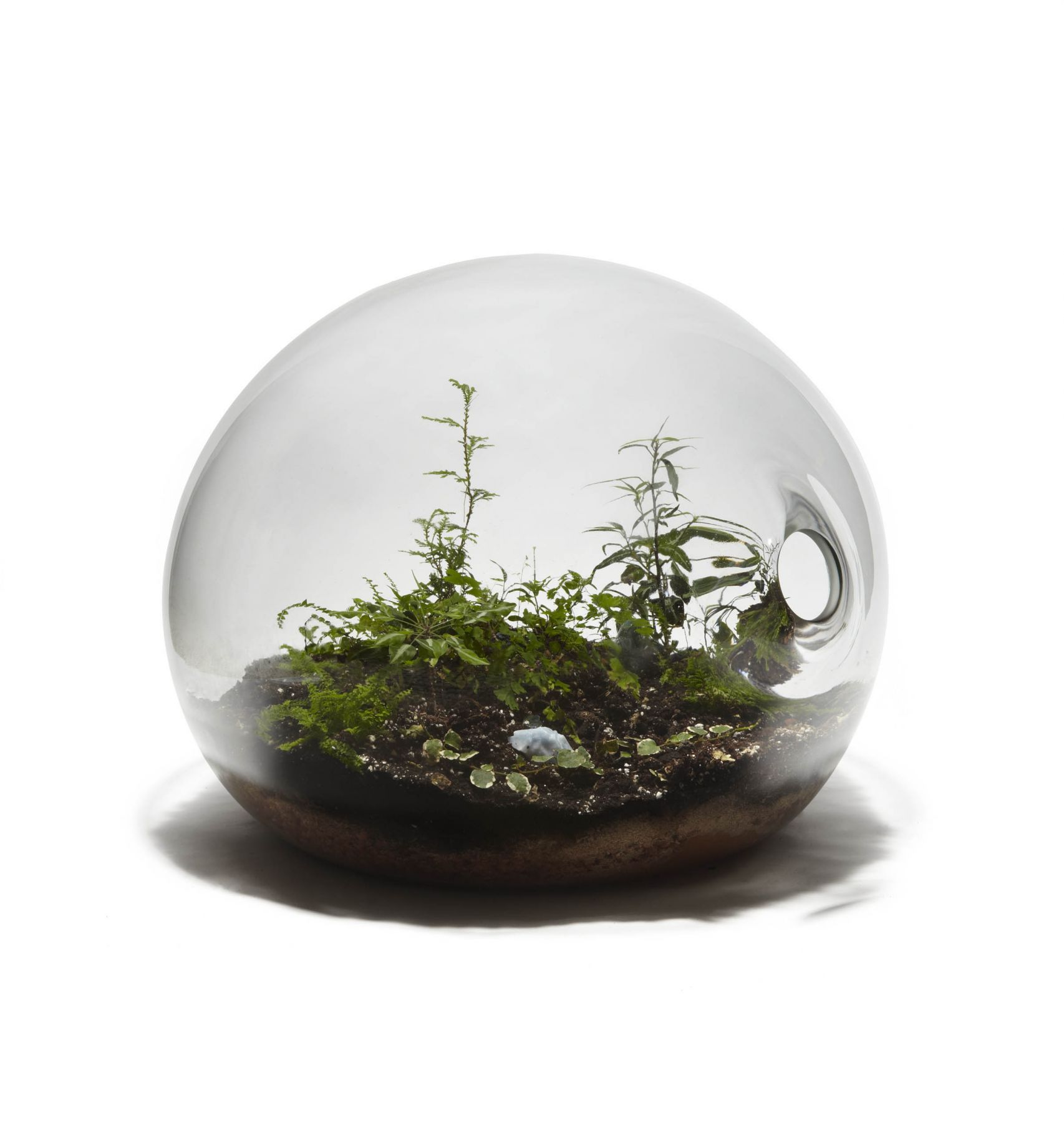clear orb with plants by paula hayes
